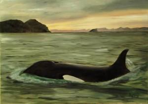 10 03 01 Orca.jpg-for-web-large - Kopie